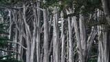 Seal Cove Cypress Tree Grove - 217516968