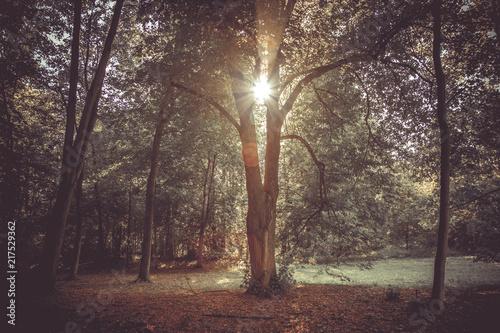 Foto Murales Słońce przebijające się przez drzewo