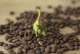 Green dinosaur toy with coffee beans on a wooden table