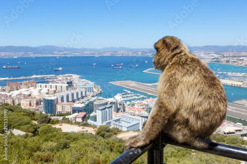 Foto Spatwand Aap Gibraltar Affe Affen Affenfelsen Hafen Urlaub Flughafen Airport Spanien