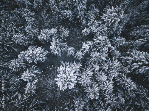 Foto Murales An Aerial View of Snowcovered Pinetrees in Winter