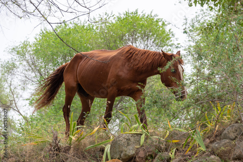 In de dag Bergrivier horses in nature