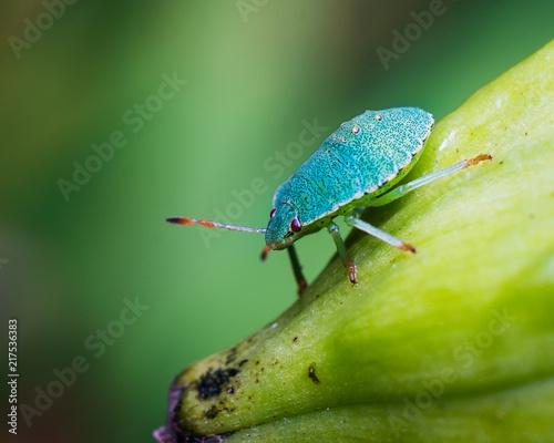 Foto Murales beetle
