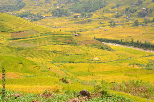 Foto Spatwand Oranje Landscape of golden rice terraced field in harvest season at Sapa in vietnam