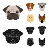 Muzzle of different breeds of dogs.Dog breed Stafford, Spitz, Risenschnauzer, German Shepherd set collection icons in cartoon,black style vector symbol stock illustration web.