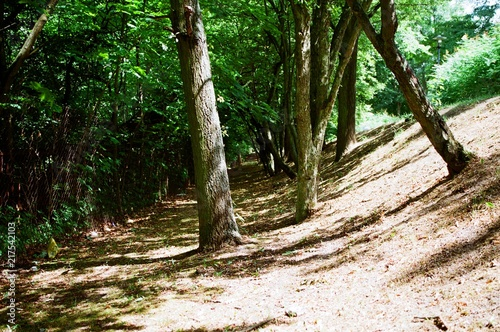 Fotobehang Weg in bos przyroda