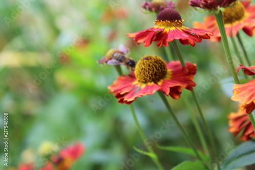 Foto Murales Nature Flower Background