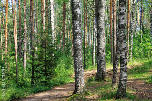 Summer, Russian forest, birches and pines