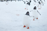 cute funny gentoo penguins running on snow to the camera, curious birds in Antarctica, enthusiasm concept - 217568742