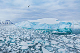 Antarctica nature beautiful landscape, bird flying over icebergs - 217568747