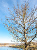 Leafless tree stand over hot spring in winter season under blue sky, Iceland - 217568914