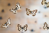 Butterfly in museum with audiences - 217571754
