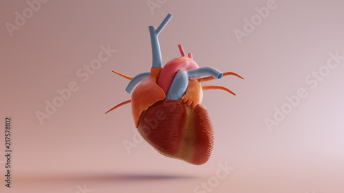 Human Anatomical Heart Model 3d illustration 3d render | Buy Photos
