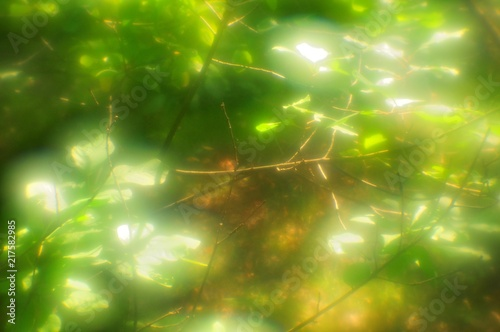 Foto Murales Shimmering foliage in the magical forest, the effect is a soft blur, pictorialism