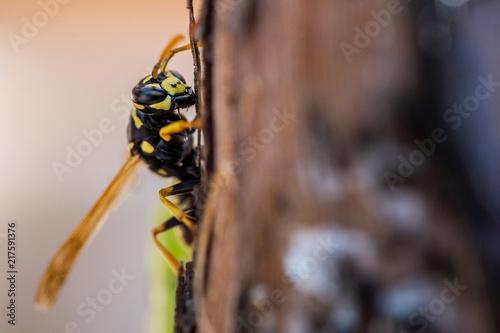 Foto Murales Nahaufnahme einer Wespe auf Baumrinde