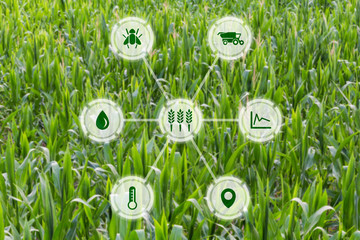 Agritech concept graphic display on field of crops background © lukesw
