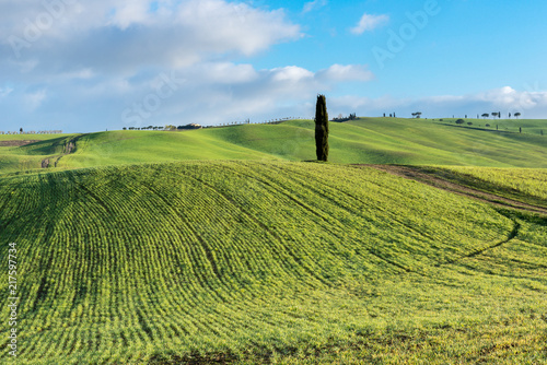 Foto Murales Green rolling hills near San Quirico d'Orcia, Tuscany, Italy