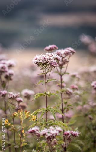 Foto Murales macro flowers