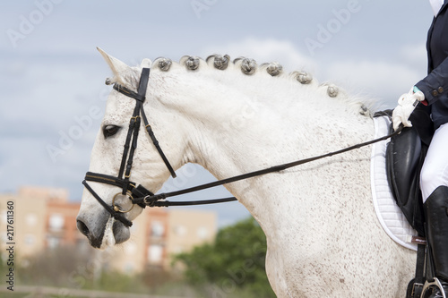 Foto Murales Retrato de un caballo español durante una competicion de doma clasica
