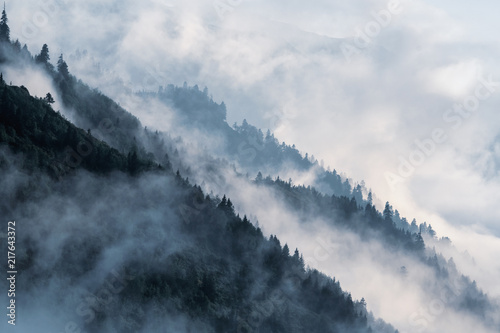 Poster Forested mountain slope in low lying valley fog with silhouettes of evergreen conifers shrouded in mist.
