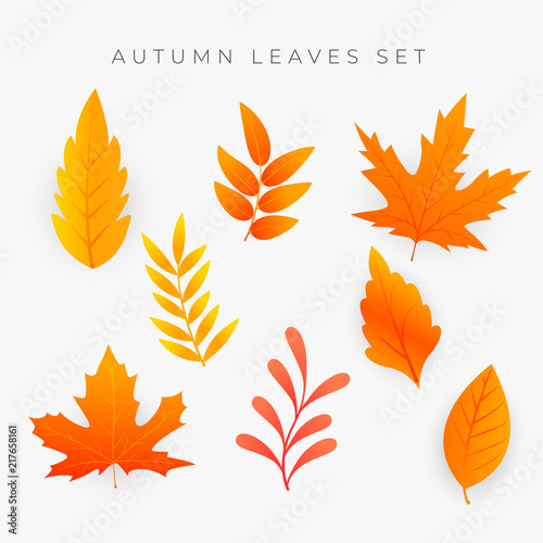 Fototapeta set of orange autumn leaves