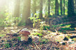 Porcini mushroom in the autumn forest. Nature background. - 217675390
