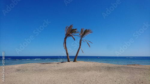 Plexiglas Tropical strand palm on the beach