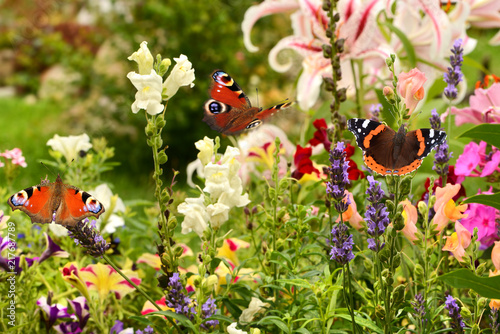 Canvas Pistache Schmetterling 507