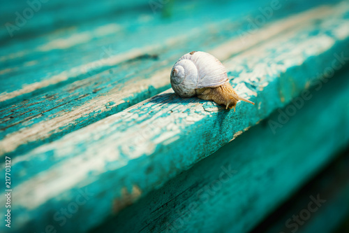 Foto Murales small snail approaches the edge of an old, blue-painted bench