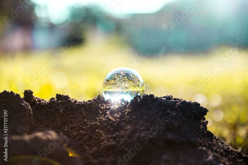 Foto Murales photography glass ball in soil reflecting garden landscape of grass