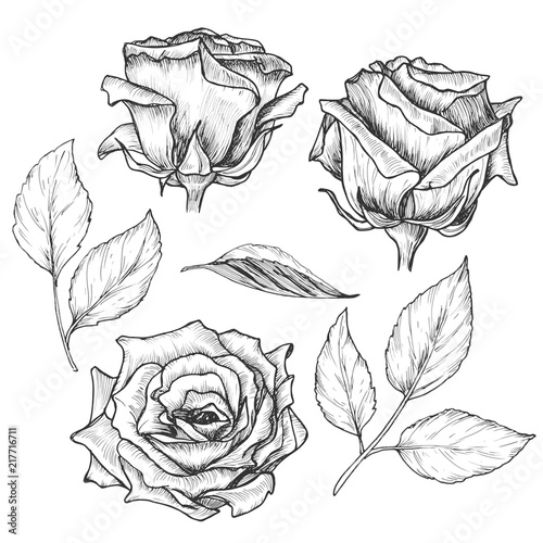 hand drawn roses with leaves set vintage etching sketch botanical