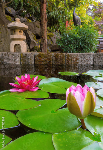 Foto Murales Water Lily Blooming in Backyard garden Pond
