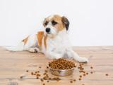 Hund auf dem boden liegend vor einem Futternapf mit Trockenfutter