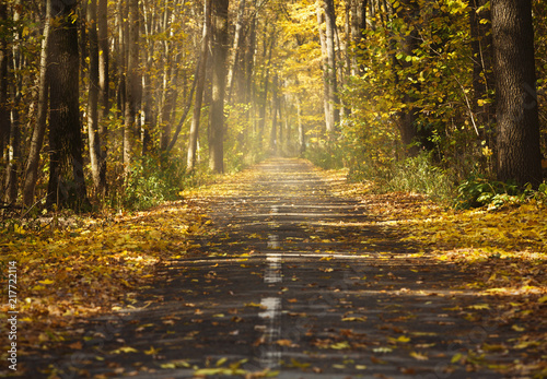 Fotobehang Herfst Landscape with empty countryside road and colored trees