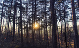 sunset viewed from forest