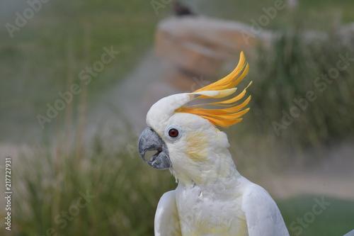Aluminium Papegaai safari