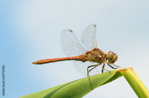 Foto Murales Dragonfly sitting on the stem of the plant.