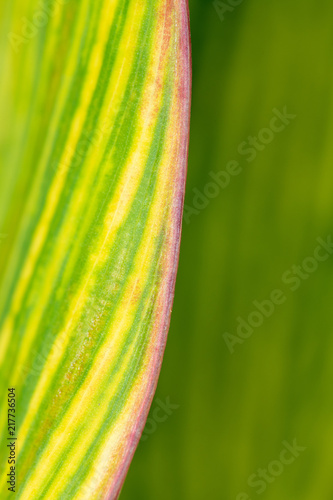Abstract of a leaf