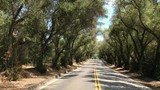 Traveling through a grove of beautiful trees on a paved road. - 217738597