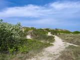 Sand Dunes at Hornbaek, Denmark, Scandinavia - 217747348