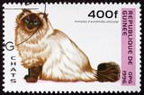 Postage stamp Guinea 1996 Himalayan Cat