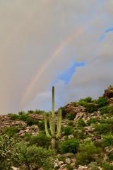 Double Rainbow Saguaro Cactus Tucson Arizona Marana Monsoon