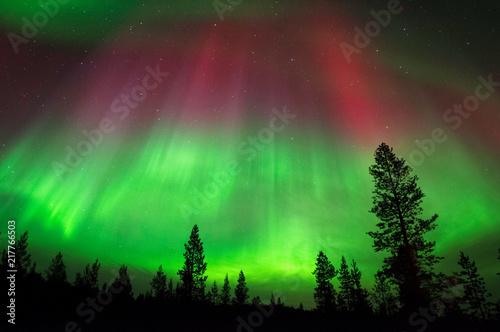Canvas Noorderlicht Aurora Borealis, Northern Lights, above boreal forest in Northern Finland.