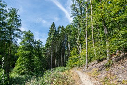 Fotobehang Weg in bos Wanderung über einen schmalen Pfad in den Wald