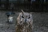 Owl Dark Background - 217768354
