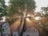 Promienie wschodzącego słońca pośród drzew. - 217771195