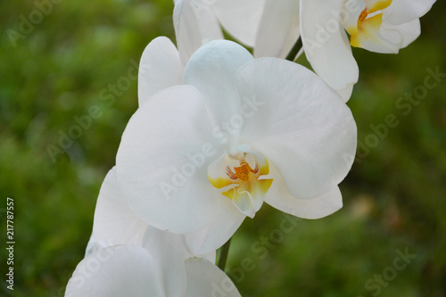 orchid, flower, white, spring, nature, plant, bloom, blossom, green, garden, flowers, beautiful, orchid, beauty, petal, yellow, floral, blooming, summer, macro, apple, flora, pink, leaf, petals, close - 217787557