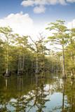 Beautiful View of a Louisiana Bayou - 217791388