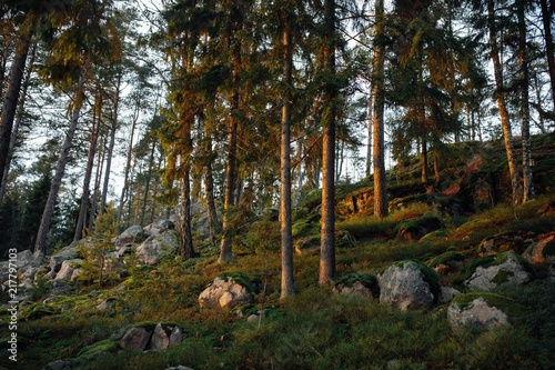 Foto Murales autumn forest trees landscape at sunset