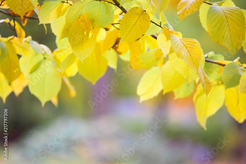 Fotobehang Herfst Autumn leaves background